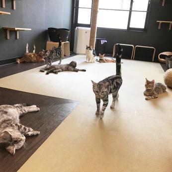 猫喫茶 空陸家 長崎浜町店 猫カフェスタッフ