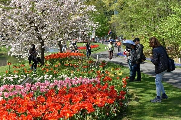 一般財団法人鳥取県観光事業団とっとり花回廊