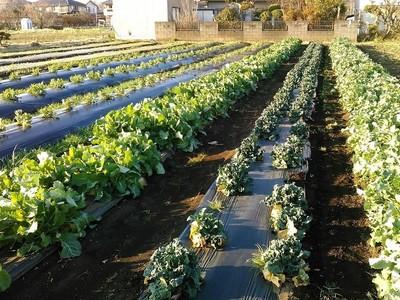 アグリイノベーション大学校 横浜農場
