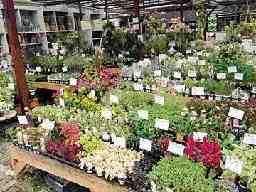 有限会社 緑のマーケット