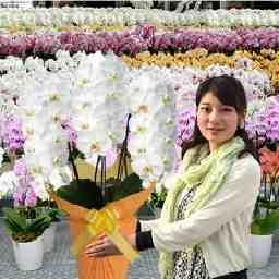 胡蝶蘭の生産販売 海老名洋蘭園