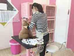 ペット美容室アリボックス 1 サンシティ星川 2 大矢知店