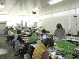 株式会社熊本野菜育苗センター