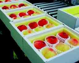 岡山県青果物販売株式会社
