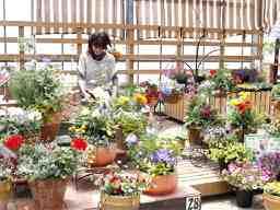 テーブルガーデン 1 本店 2 鴨志田