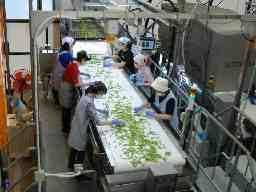 JA新潟みらい 白根野菜流通センター