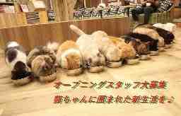 猫カフェMOCHAイオンモール大日店