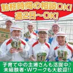 株式会社 村上農園 大井川第2生産センター