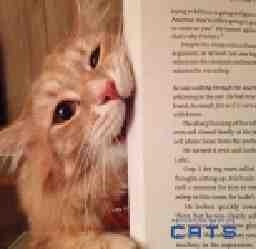 株式会社CATS