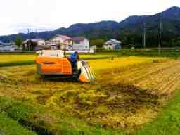 有限会社菊地農園