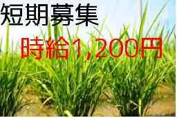 農業生産法人 ㈱ファーミング(㈲奥松農園)