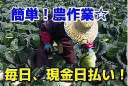 ㈱菜果野アグリ(大分県農業労働力最適活用協議会)