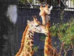 宮崎市フェニックス自然動物園管理株式会社