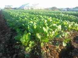 合同会社Seven Herbs Farm Hiramoto