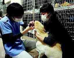 有限会社わたなべ動物病院