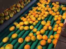 有限会社上三柑橘