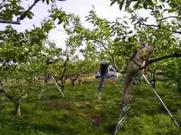加藤果樹園