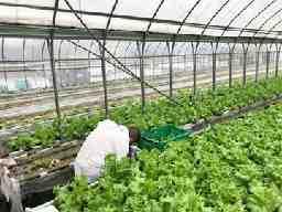 農業生産法人 株式会社 和創