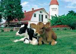 株式会社 共進舎牧農園
