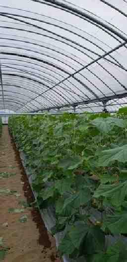 111農園