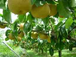 (農法)世羅大豊農園