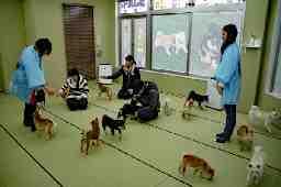 株式会社富士野荘飼育センター