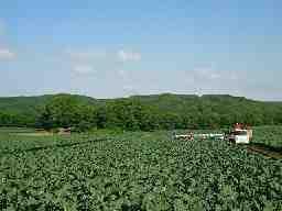 株式会社クリーンコーポレーション 《勤務地》北海道千歳市中央