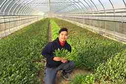 K&A FARM
