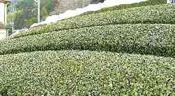 株式会社渡邊製茶工場