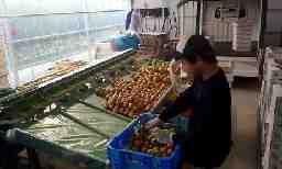 JAぎふ 農家 西岡トマト農園
