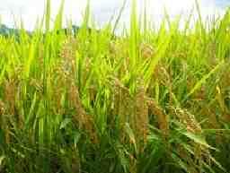 松本ハイランド農業協同組合