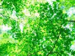 有限会社新緑造園土木