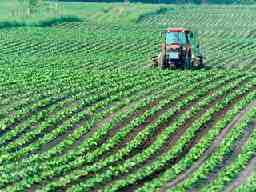 麦わら農園