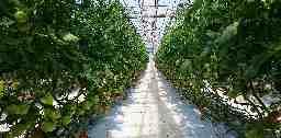 柏崎トマト園