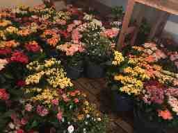 バラ農園内のファクトリーでお花の制作STAFF